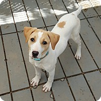 Adopt A Pet :: Sonja Norway - Barnesville, GA
