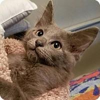 Adopt A Pet :: Racer - Greenville, NC