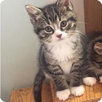 Adopt A Pet :: Gizelle - Grand Ledge, MI