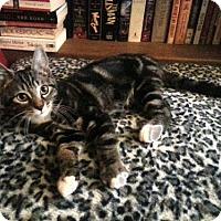 Adopt A Pet :: Ezekiel - Philadelphia, PA