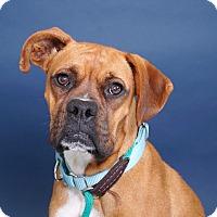 Adopt A Pet :: Lizzy - Sudbury, MA