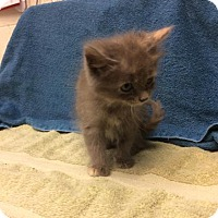 Adopt A Pet :: Kathryn Hepburn - Janesville, WI