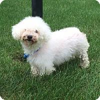 Adopt A Pet :: Maggie - Barrington, IL