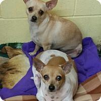 Adopt A Pet :: Alicia - Shreveport, LA