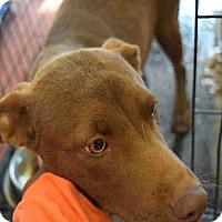 Adopt A Pet :: Blaze - Newnan City, GA