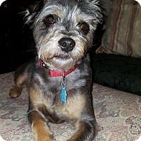 Adopt A Pet :: Samba - Brunswick, ME