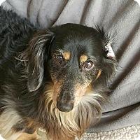 Adopt A Pet :: Willie - Fallbrook, CA