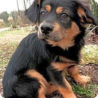 Adopt A Pet :: Gus - Tyler, TX