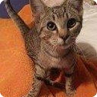 Adopt A Pet :: SUSIE - Hampton, VA