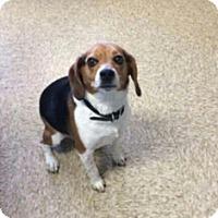 Adopt A Pet :: Tori - Sistersville, WV