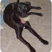 Adopt A Pet :: Wendy - Sacramento, CA