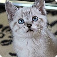 Adopt A Pet :: Blanco - Chicago, IL