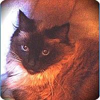 Adopt A Pet :: Pretty - Davis, CA