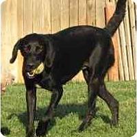 Adopt A Pet :: Bobbie - Longmont, CO