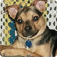 Adopt A Pet :: Billy - Hamilton, ON