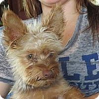 Adopt A Pet :: Rascal - Salem, NH