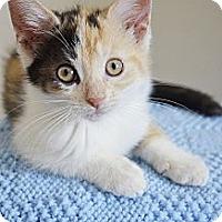 Adopt A Pet :: Brenna - Xenia, OH
