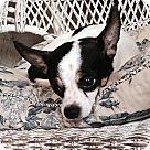 Adopt A Pet :: SHIO