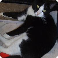 Adopt A Pet :: Tom - Bear, DE