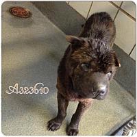 Adopt A Pet :: Ada in TX - Mira Loma, CA
