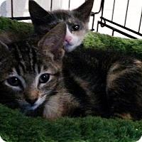 Adopt A Pet :: Aries - Berkeley Hts, NJ