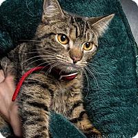 Adopt A Pet :: Tina - Herndon, VA