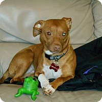 Adopt A Pet :: Avril - PENDING - Grafton, WI
