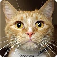 Adopt A Pet :: Brother - Birmingham, AL
