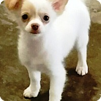 Adopt A Pet :: I'M ADOPTED Eenie Wilcoxon - Oswego, IL