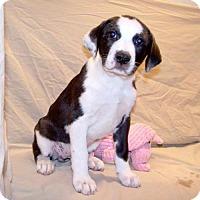 Adopt A Pet :: 16-d06-008 Gertrude - Fayetteville, TN