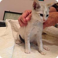 Adopt A Pet :: Julep - Richmond, VA
