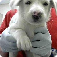 Adopt A Pet :: SUMMER - Conroe, TX