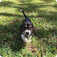 Adopt A Pet :: BROOKLYN - Odessa, FL