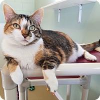 Adopt A Pet :: Chloe * Supermodel - La Crescent, MN
