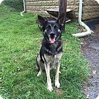Adopt A Pet :: Viktor - Portland, ME