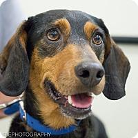Adopt A Pet :: Jango - Grand Rapids, MI