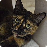 Adopt A Pet :: Fera - Denver, CO