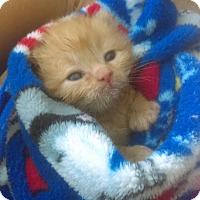 Adopt A Pet :: Poe - Garland, TX