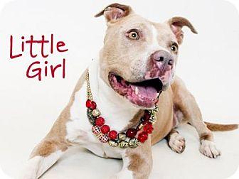 American Pit Bull Terrier Dog for adoption in Sacramento, California - LITTLE GIRL