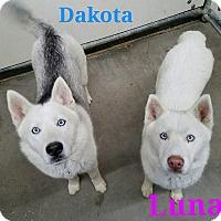 Adopt A Pet :: Dakota & Luna - California City, CA
