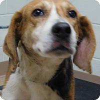 Adopt A Pet :: Carter - Saginaw, MI