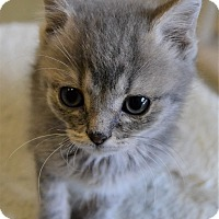 Adopt A Pet :: Wesson - Michigan City, IN