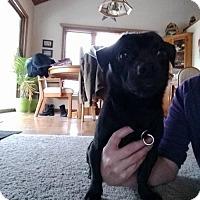 Adopt A Pet :: Otis - Princeton, MN
