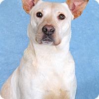 Adopt A Pet :: Ann - Encinitas, CA