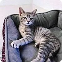 Adopt A Pet :: Tonka - Kalamazoo, MI