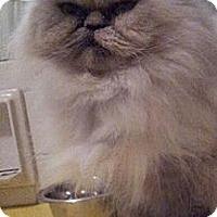 Adopt A Pet :: Kahla - Columbus, OH