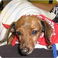 Adopt A Pet :: Webster - Scottsdale, AZ
