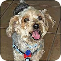 Adopt A Pet :: Cubby - Homestead, FL