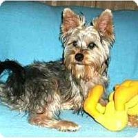 Adopt A Pet :: Yoshi - Mooy, AL