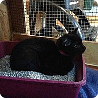 Adopt A Pet :: Meeouch - Lancaster, MA